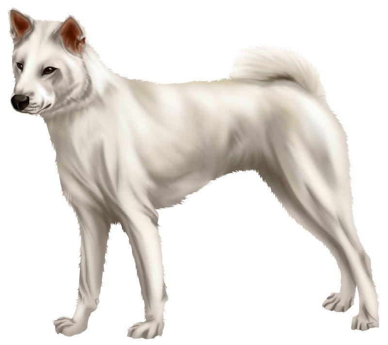紀州犬の画像 p1_39