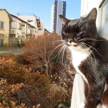 お正月のころの野良猫さん