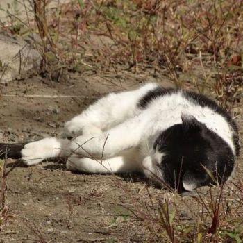団地野良猫パート2。地面でゴロゴロしてて可愛かった。ここの団地の猫達は、多分えさをもらっているのか、毛並みとかがいい。