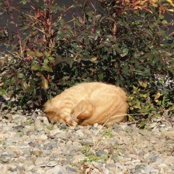 団地の草陰で野良猫が丸くなっていたので、撮ってみた。
