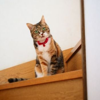 階段からニャー