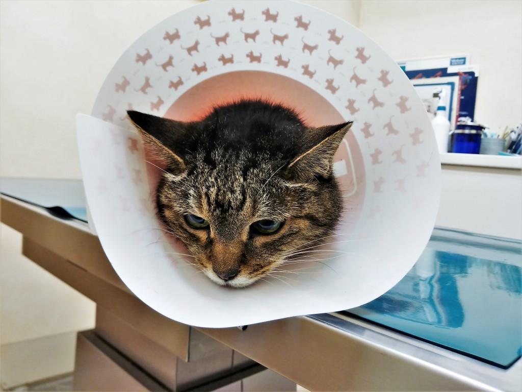 腎 不全 緩和 猫 ケア 末期